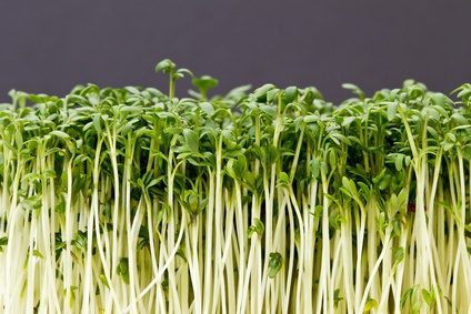 Sprouts: Food for your health