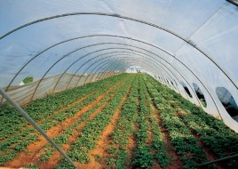 Organic greenhouses