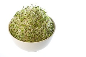 Alfalfa, Enzymes and Youth