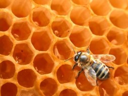 The hive society: royal jelly, pollen, honey, wax...