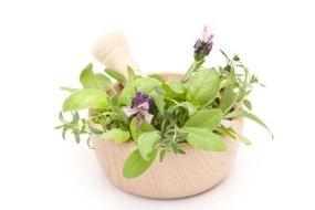 Plants: Medicines in your garden