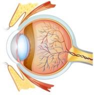 Iridiology. Diagnosis through the eyes