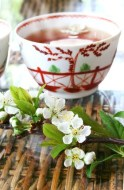 White Tea: Preparation, cosmetics uses and much more