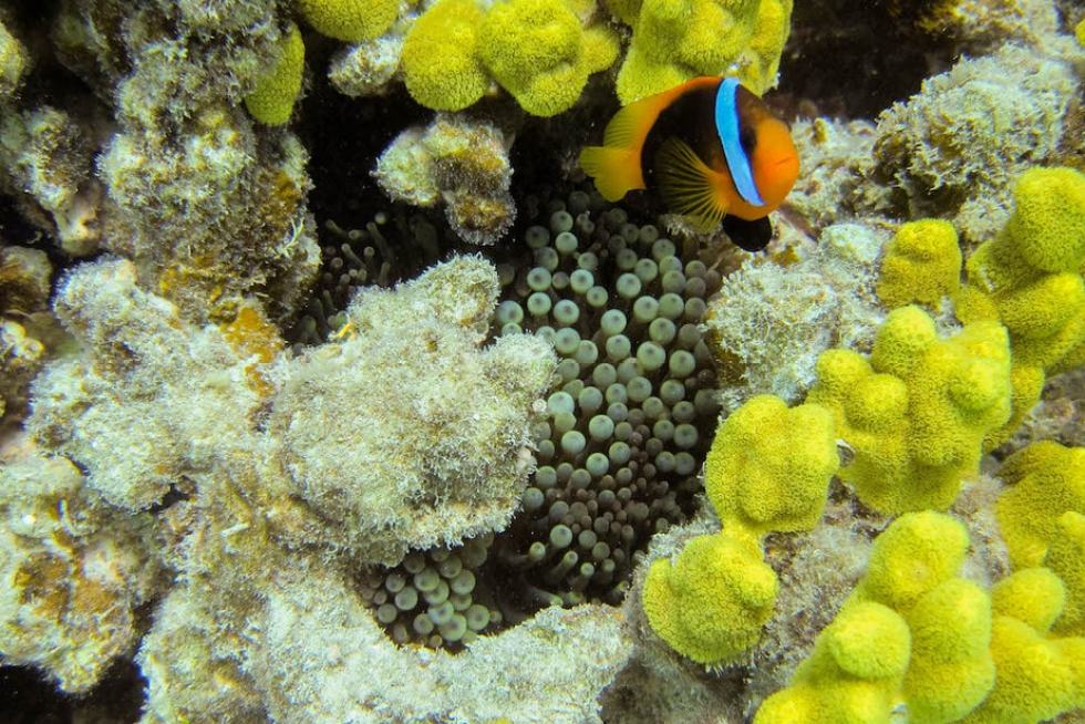 Great Barrier Reef Tours: Michaelmas Cay