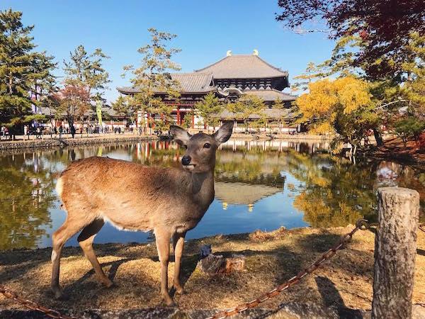 Nara Park, Fall in Japan