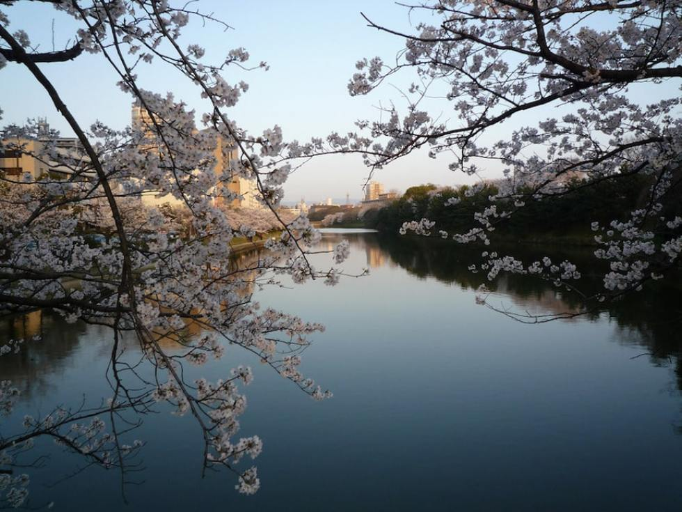 Where and When to See Sakura: Fukuoka, Japan