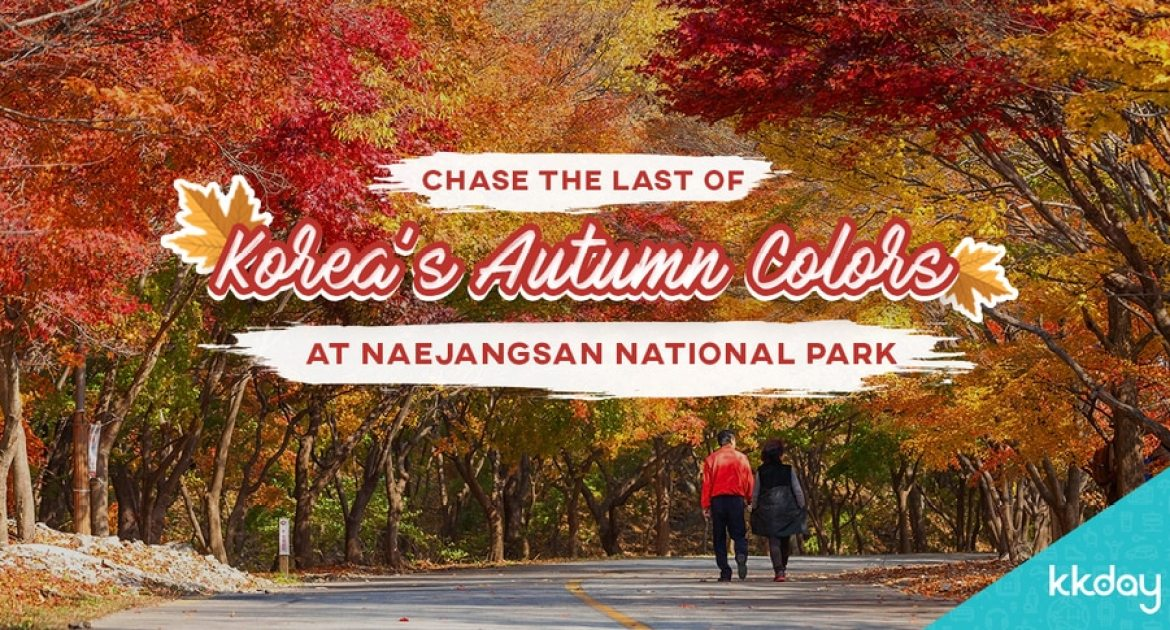Hike Korea's Maple Leaf Paradise: Naejangsan National Park in Autumn