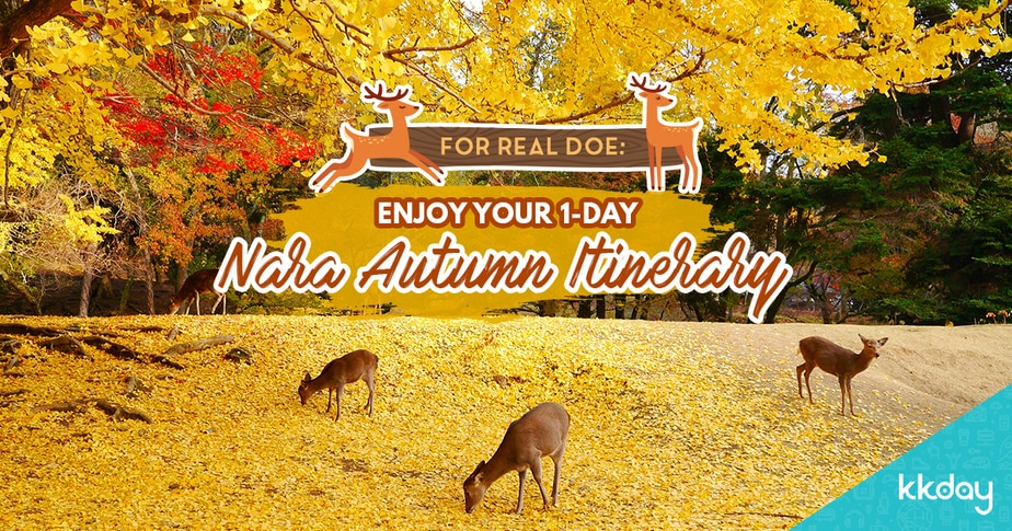 Stunning Temples, Maple Leaves and Deer: Nara 1-Day Autumn Itinerary