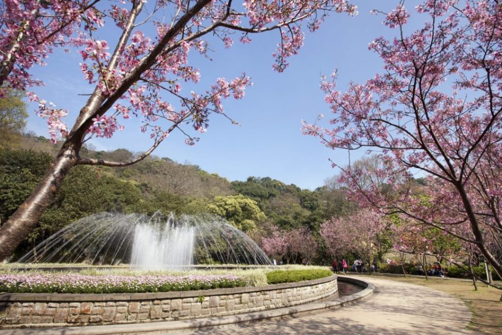 Yangmingshan National Park Fountain with cherry blossoms