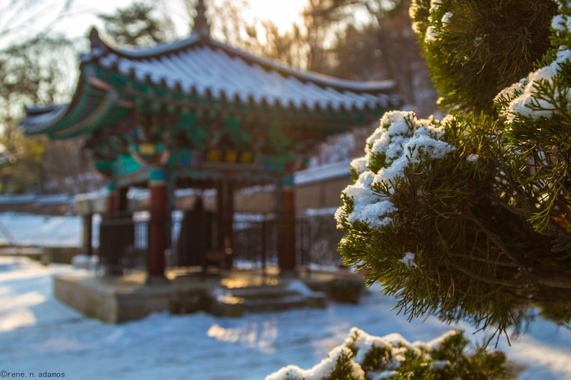 Winter Vacation Destination: Seoul, Korea