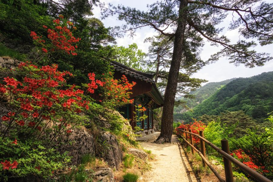 Fall in Korea: Odaesan National Park