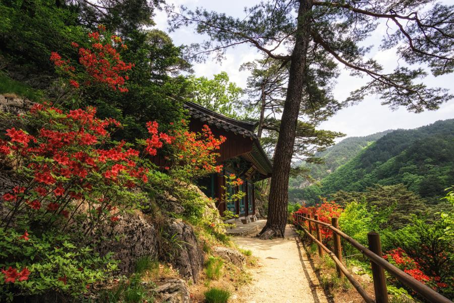 Fall in Korea: Odaesan National Park