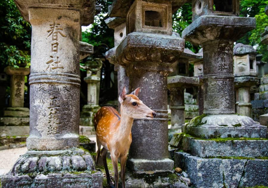 """""""I see you over deer!"""" (image via Shutterstock)"""