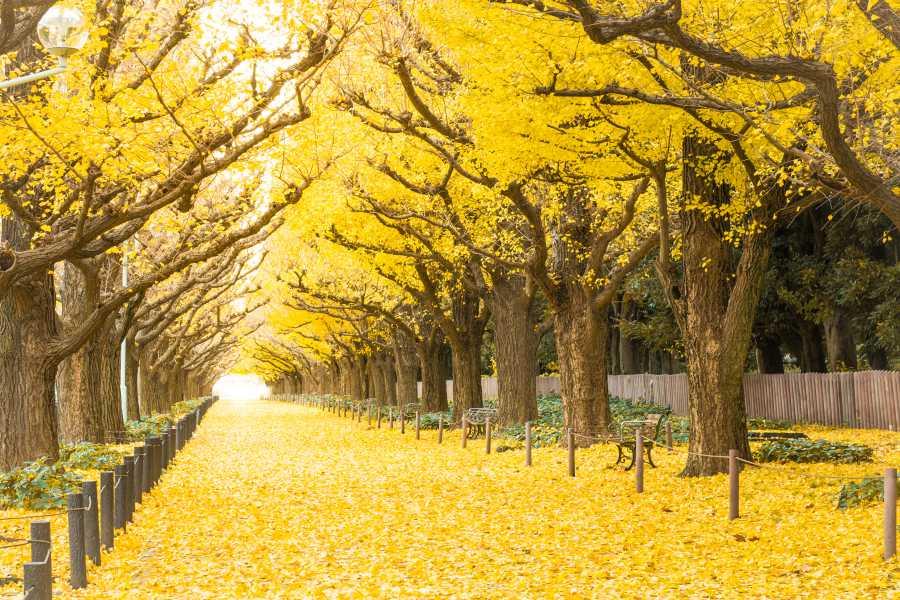 Ichi Namiko Avenue (image via Shutterstock)