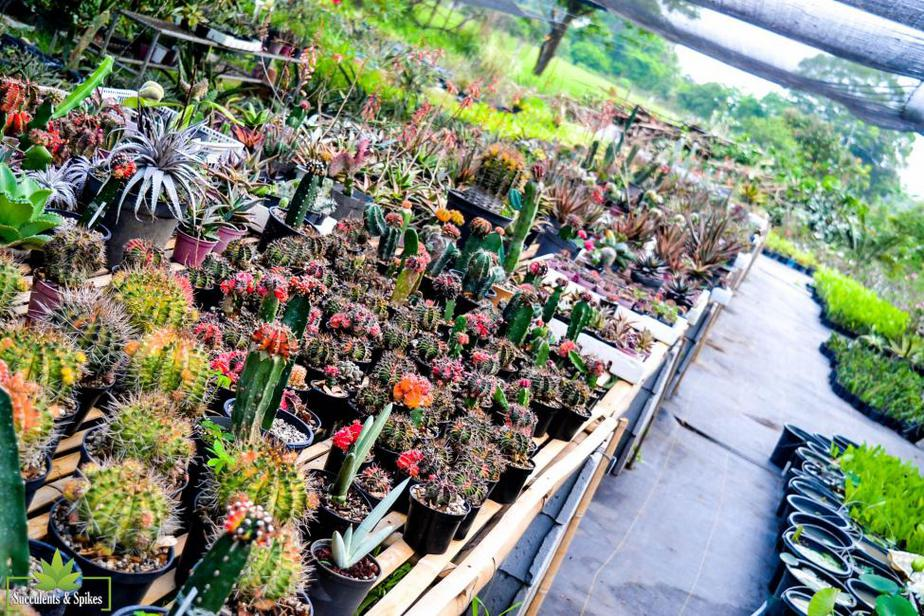 Awaken Your Inner Plant Parent In This Plant Nursery In The South