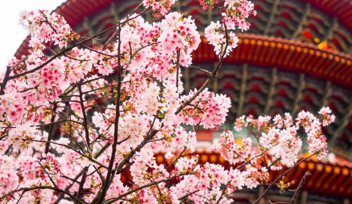 A Spring Guide to Taiwan's Cherry Blossoms This 2019