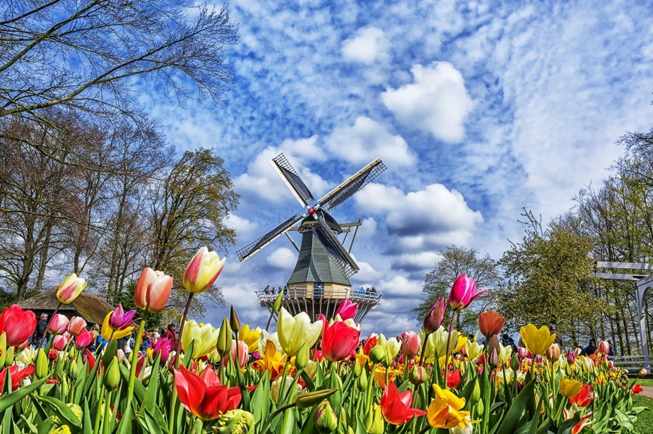 The Netherlands' Most Beautiful Spring Garden Has Opened Its Gates—Online