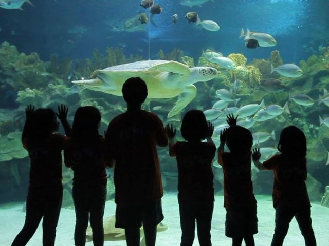 5 Tips That Will Make Your Visit To Aquaria KLCC Extra Memorable