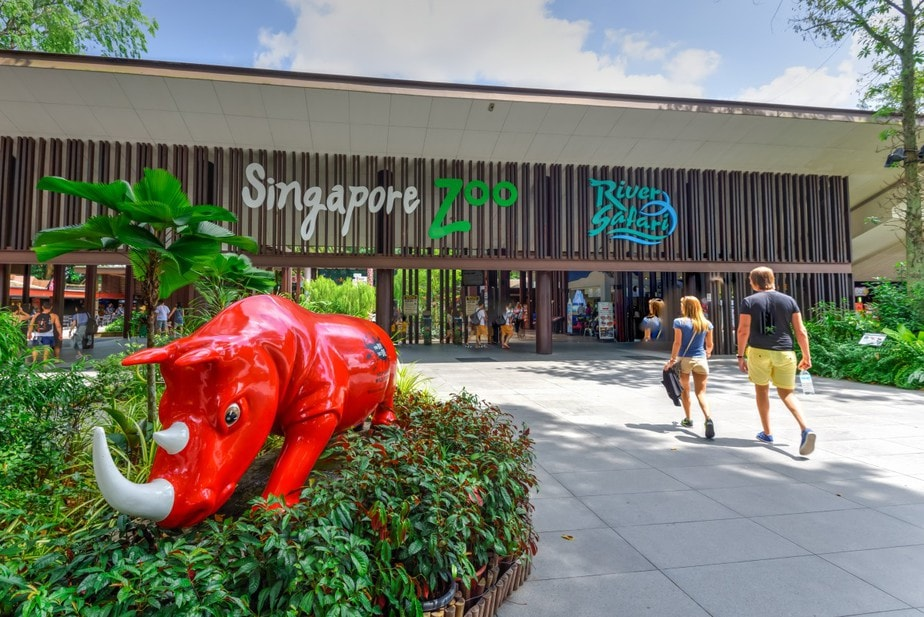 Experiencing Wildlife In The City: Your Guide To Singapore Zoo