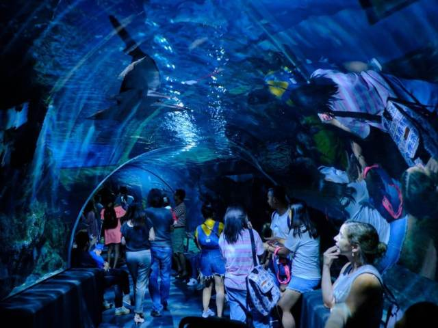 8 Unique Experiences At Sea Life Bangkok Ocean World