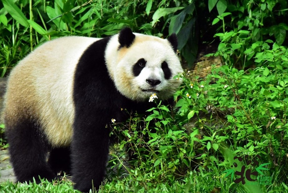 Taipei Zoo Guide: Explore the Largest Zoo in Asia