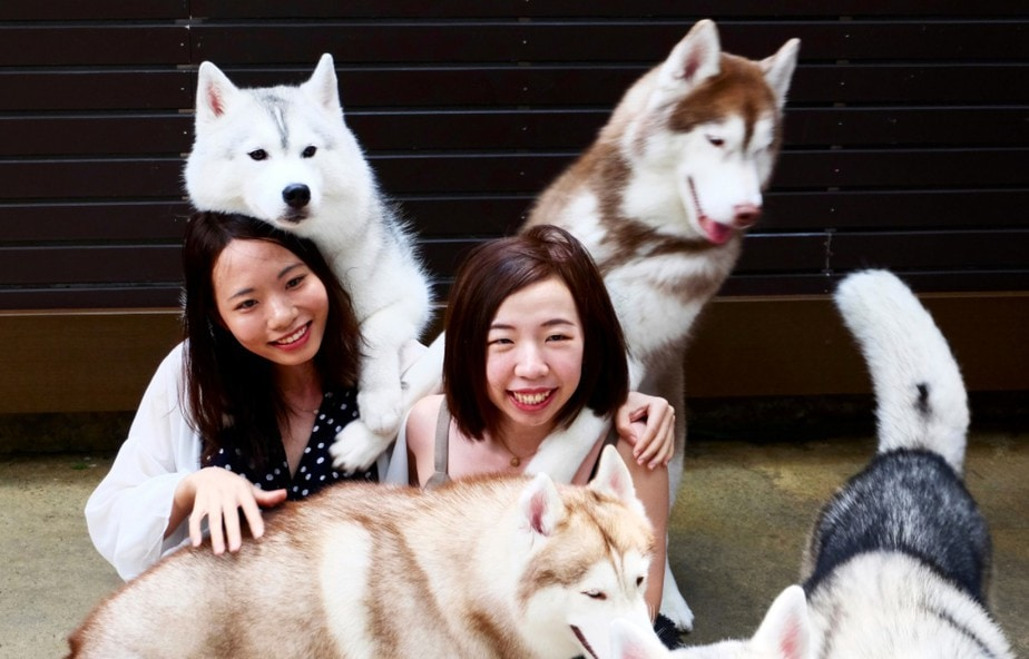 Cuddle with Cute Corgis and Play with Huskies: 5 Must-Visit Dog Cafes in Bangkok