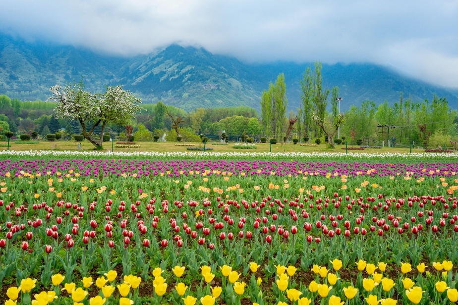 Stunning Photos of Asia's Largest Tulip Garden To Brighten Up Your Day