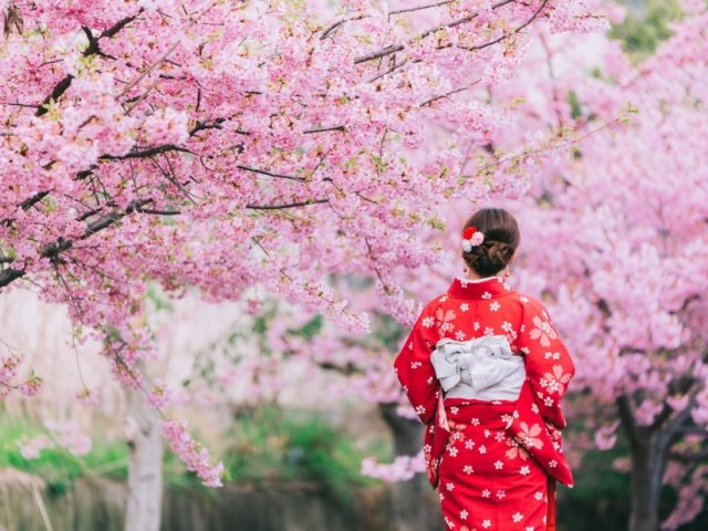 Cherry Blossoms In Japan: When And Where To See Sakura This 2020