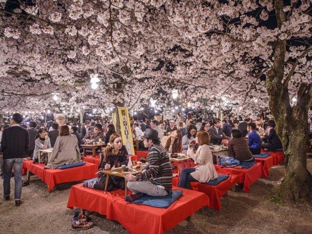 Hanami: Japan's Favorite Springtime Hobby