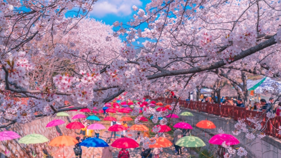 You Gotta Check Out These Stunning Cherry Blossom Festivals In South Korea This Spring