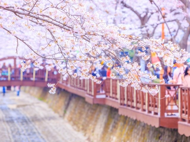 2020 South Korea Cherry Blossom Forecast—When To Go And Where To See The Blooms