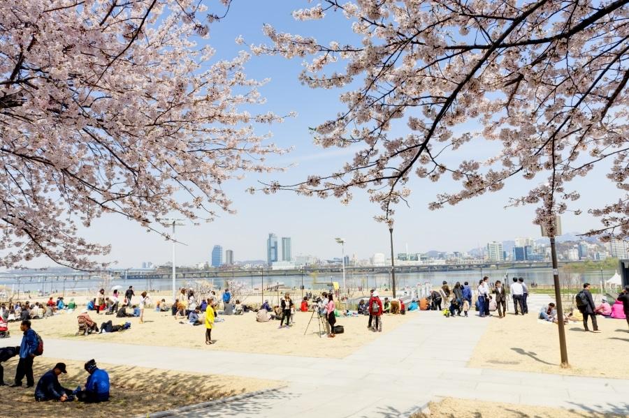 Yeouido Flower Festival
