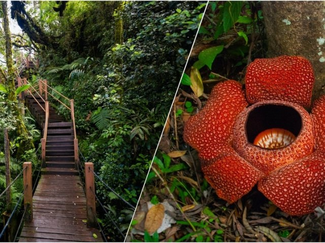 5 Of The Most Unique Attractions in Cameron Highlands