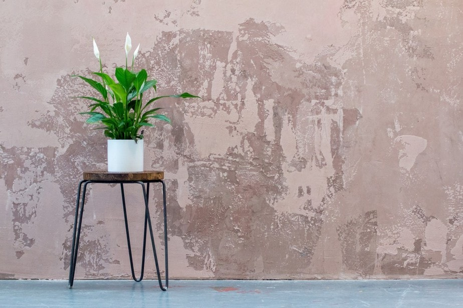 Stress-Relieving Indoor Plants for Your Home