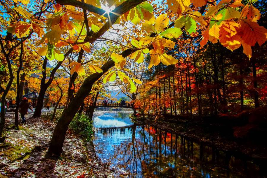 Glimpse enchanting autumn leaves at its best and brightest! (image via Shutterstock)