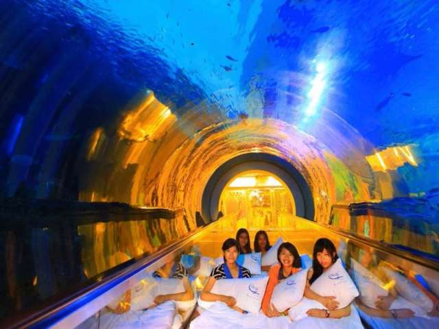 This Aquarium In Taiwan Invites You To A Unique Sleepover Experience