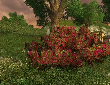 Large Imloth Melui Red Rose Bush