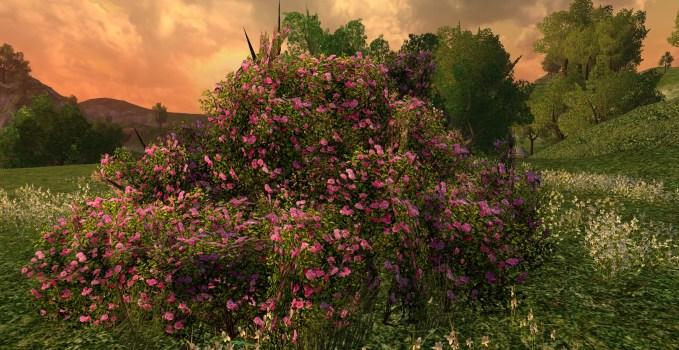 Large Imloth Melui Pink Rose Bush
