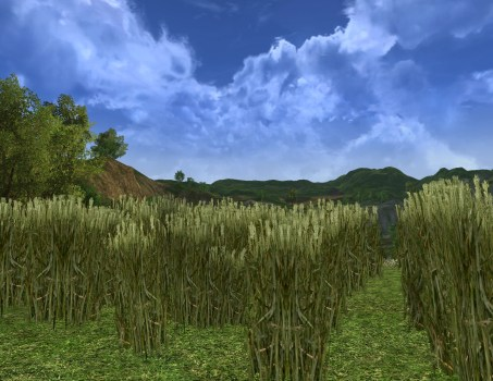 Large Dry Wheat Field