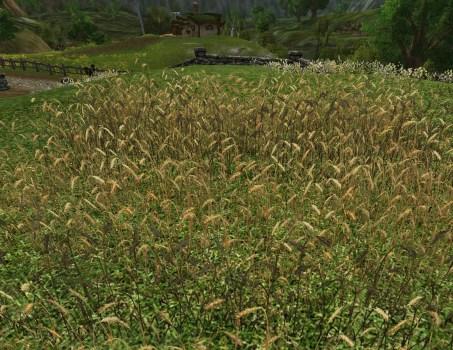 Small Wheat Field