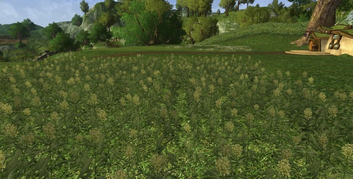 Small Pipeweed Field