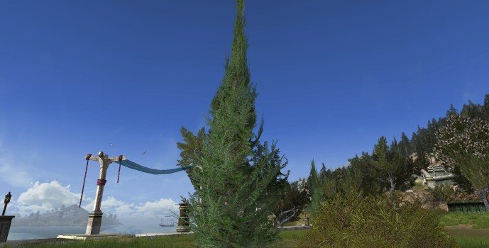 Small Cedar Tree