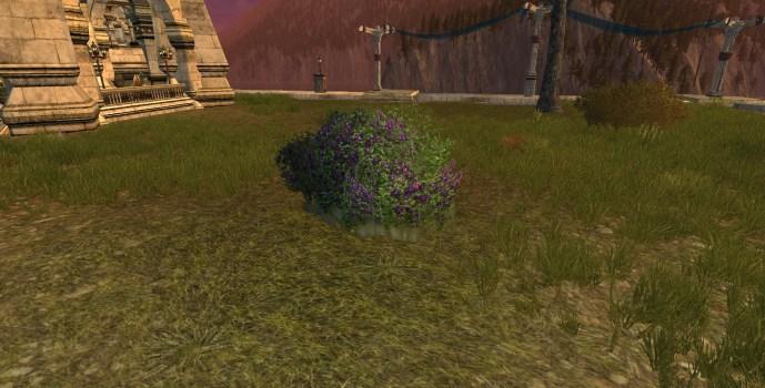 Clematis Bush