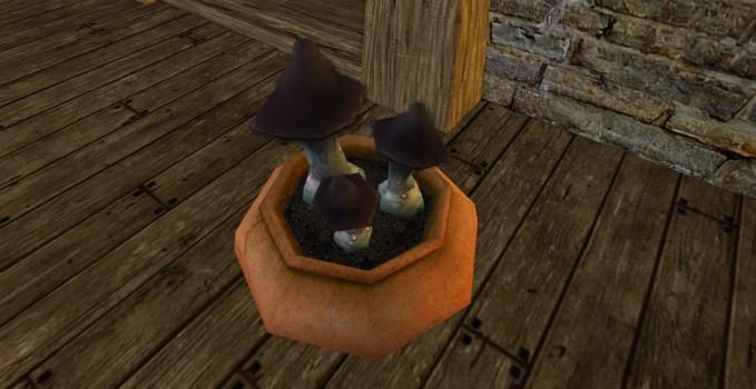 Black Mushroom Pot