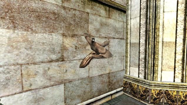 pheasant (11)
