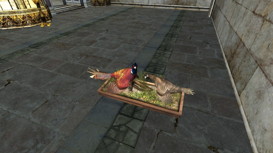 pheasant (7)