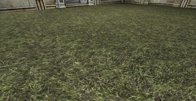 Dry Grass Floor