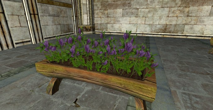Raised Planter of Purple Clover