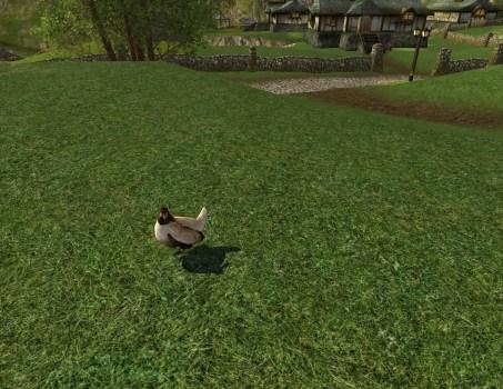 Scrapper Lawn Chicken