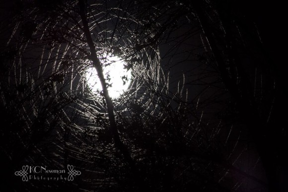 The supermoon last night - it made the coolest design with the leaves of the Jerusalem thorn tree.  Photo credit: Kathy Carson Newman